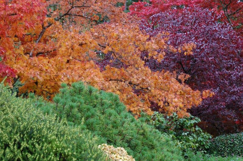 Bäume in den Butchart Gärten stockfoto
