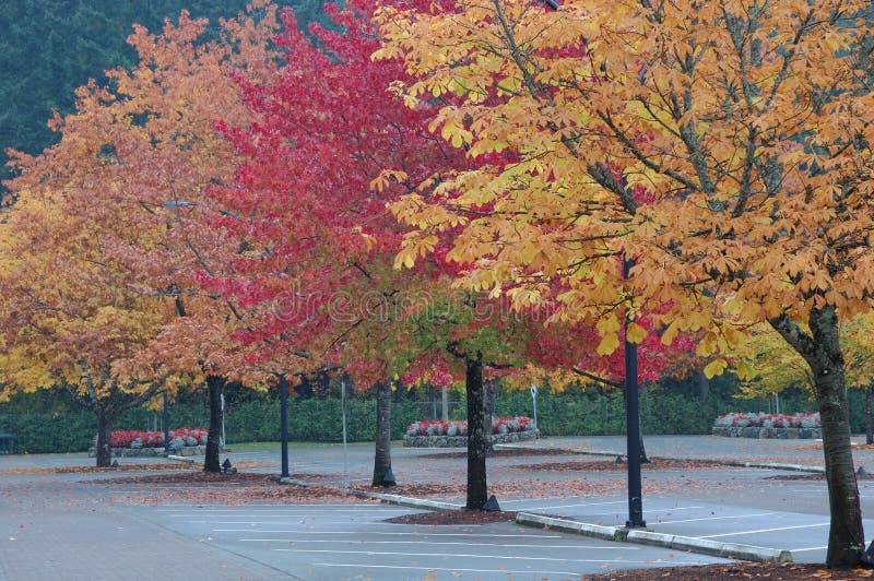 Bäume in den Butchart Gärten stockfotografie