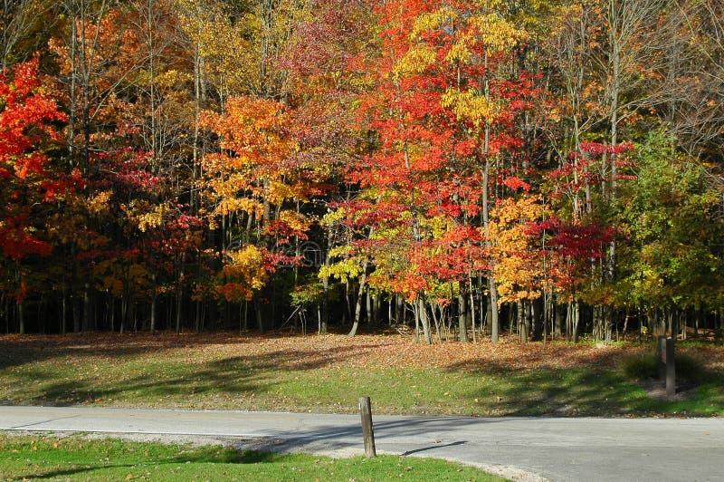 Bäume in den leuchtenden Fallfarben stockfotos