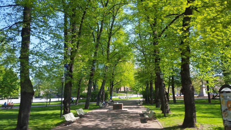 Bäume in den Parkbänke stockfotografie