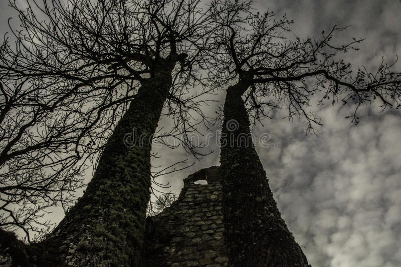 Bäume in den Ruinen lizenzfreie stockfotografie