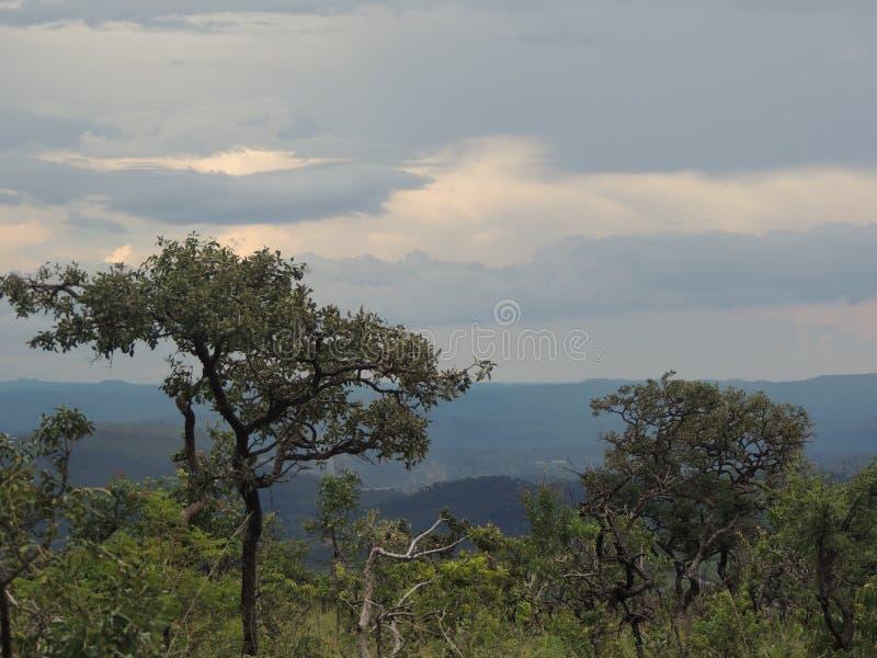 Bäume der brasilianischen Savanne/des Cerrado lizenzfreies stockbild