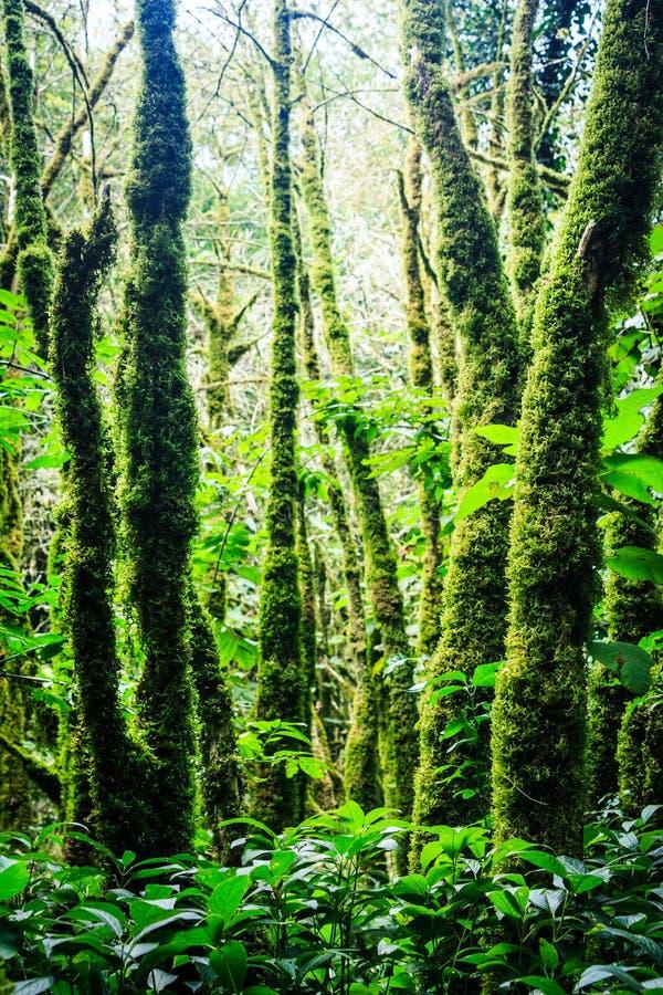 Bäume in der Buchsbaumwaldung lizenzfreies stockbild