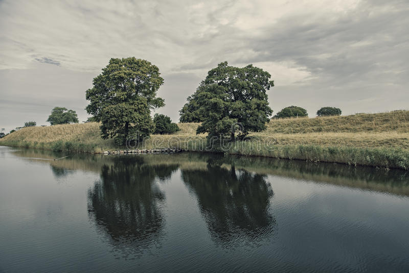Bäume an der Dämmerung stockbild