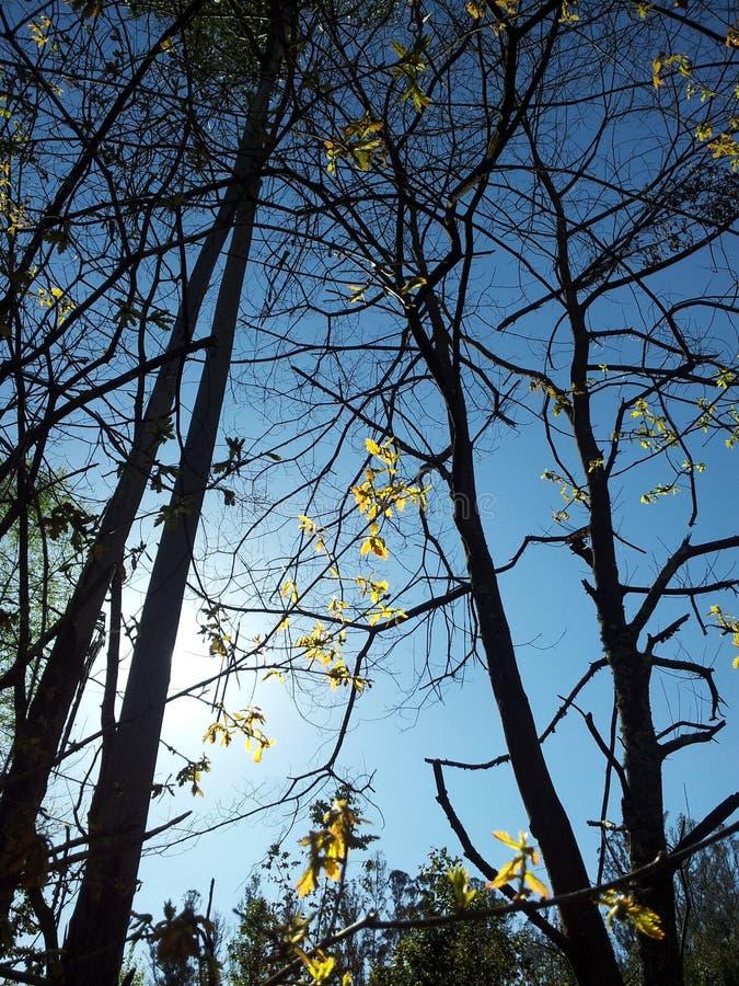 Bäume in der Dunkelheit stockbild