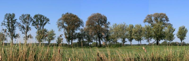 Bäume in der Landschaft lizenzfreie stockfotografie
