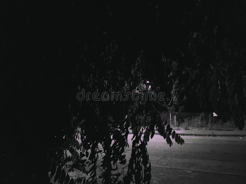 Bäume in der Nacht lizenzfreies stockfoto
