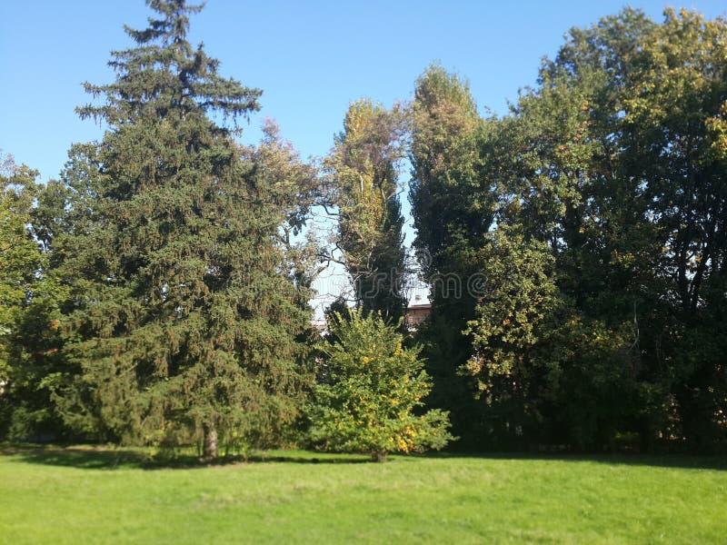 Bäume der Park lizenzfreie stockbilder