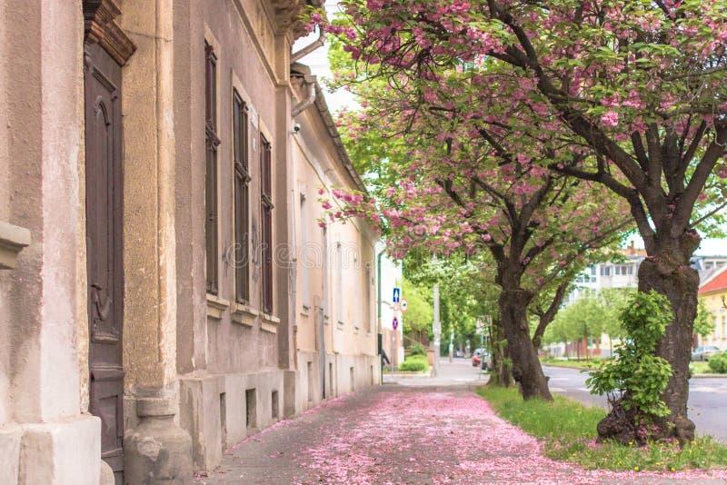 Bäume des blühenden Gartens in der Stadt im Frühjahr lizenzfreies stockbild