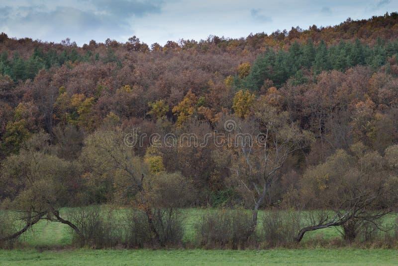 Bäume des Herbstes lizenzfreies stockbild
