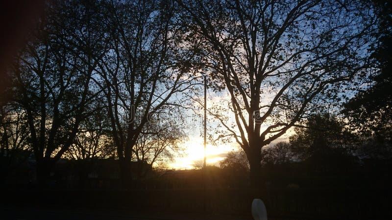 Bäume des Herbstsonnenuntergangs zwar lizenzfreie stockbilder