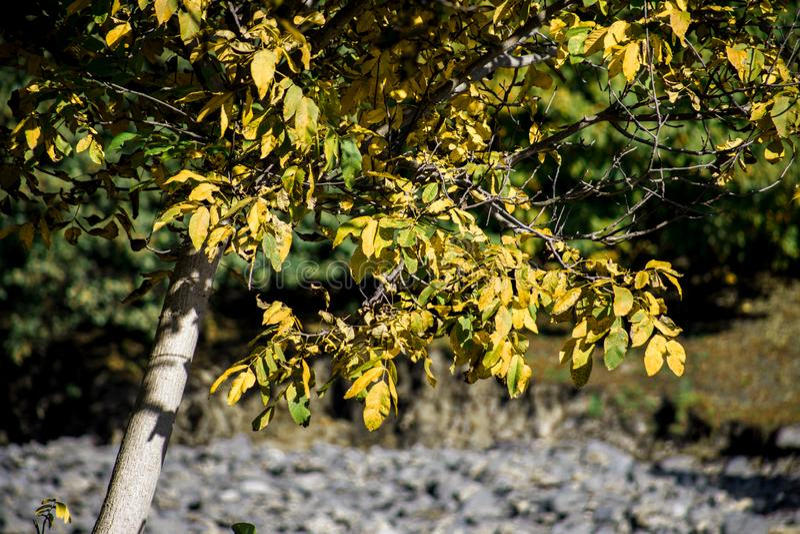 Bäume des Waldes im Herbst Landschaft mit Strahlen des warmen Lichtes azerbaijan lizenzfreies stockbild