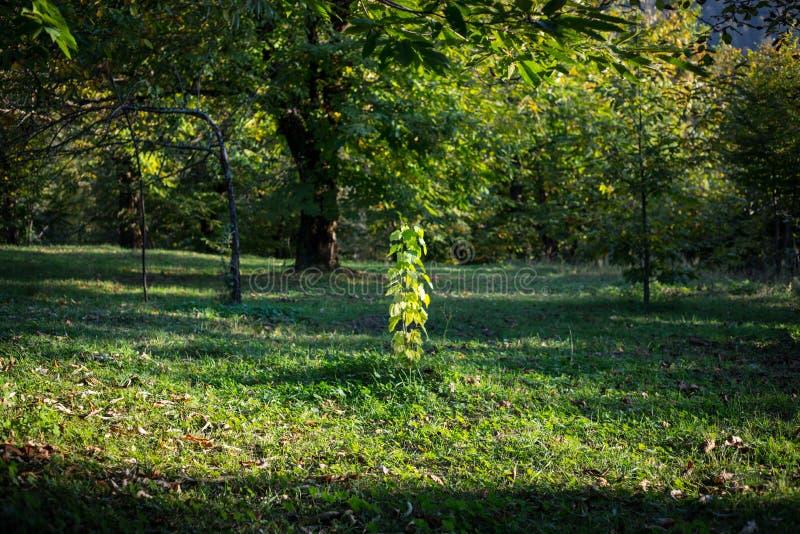 Bäume des Waldes im Herbst Landschaft mit Strahlen des warmen Lichtes azerbaijan stockfotografie