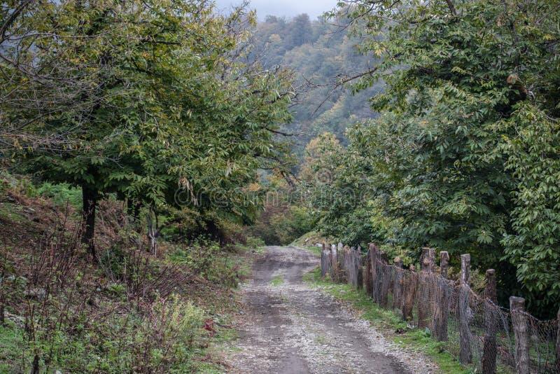 Bäume des Waldes im Herbst Landschaft mit Strahlen des warmen Lichtes azerbaijan stockbilder