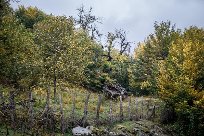 Bäume des Waldes im Herbst Landschaft mit Strahlen des warmen Lichtes azerbaijan stockfoto