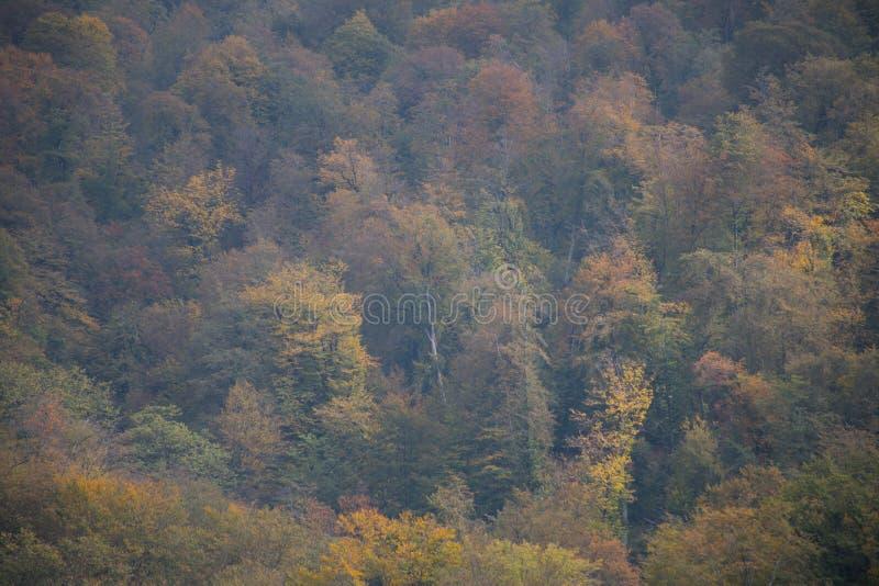 Bäume des Waldes im Herbst Landschaft mit Strahlen des warmen Lichtes azerbaijan stockbild