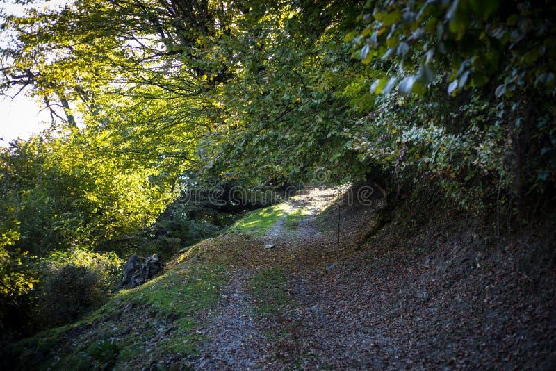 Bäume des Waldes im Herbst Landschaft mit Strahlen des warmen Lichtes azerbaijan lizenzfreie stockfotos