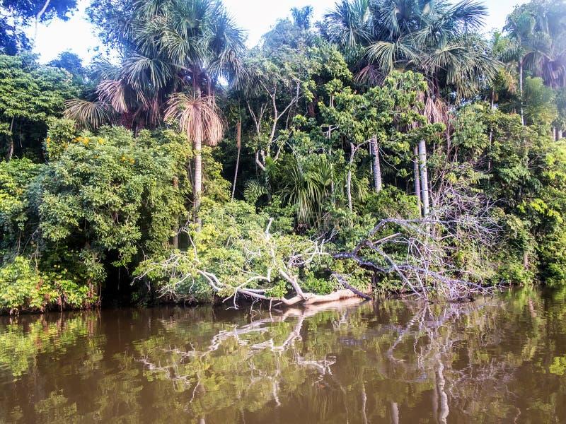 Bäume des Waldes werden im Wasser von See Sandoval, Peru widergespiegelt lizenzfreies stockfoto