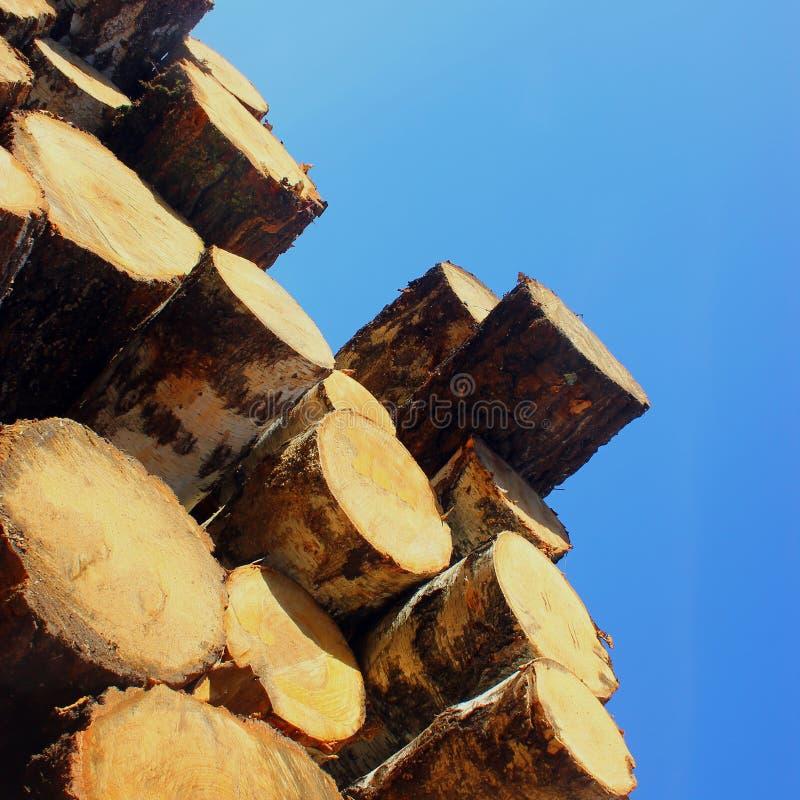 Bäume des Waldes zeichnen die Stämme auf, die von der Protokollierungsholz- und forstwirtschaft gefällt werden stockfotografie
