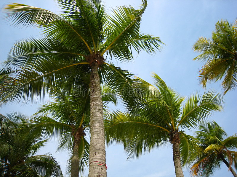 Bäume, die in den Wind tanzen lizenzfreies stockfoto