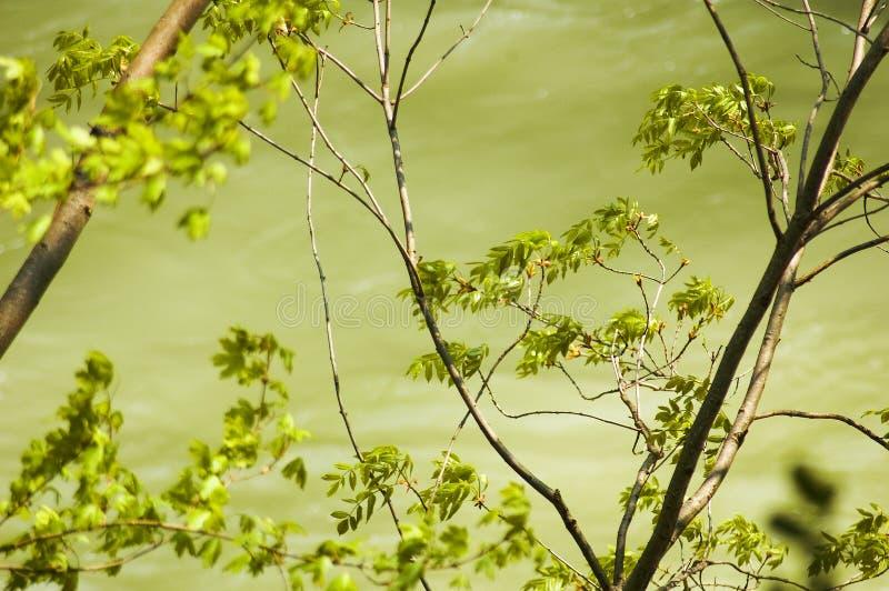 Bäume, die in die Brise beeinflussen lizenzfreie stockbilder