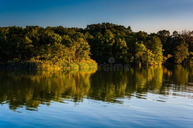 Bäume, die in Duck Creek in Essex, Maryland sich reflektieren lizenzfreies stockbild
