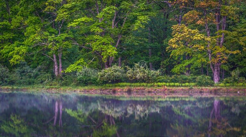 Bäume, die in einem Teich an Staatsangehörigem Recrea Delawares Water Gap sich reflektieren stockfotos