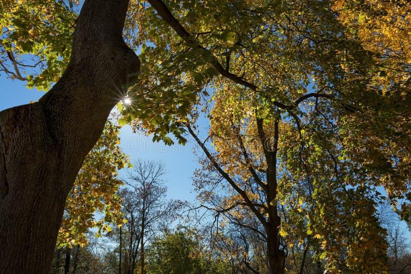 Bäume, die Farbe ändern lizenzfreie stockfotografie