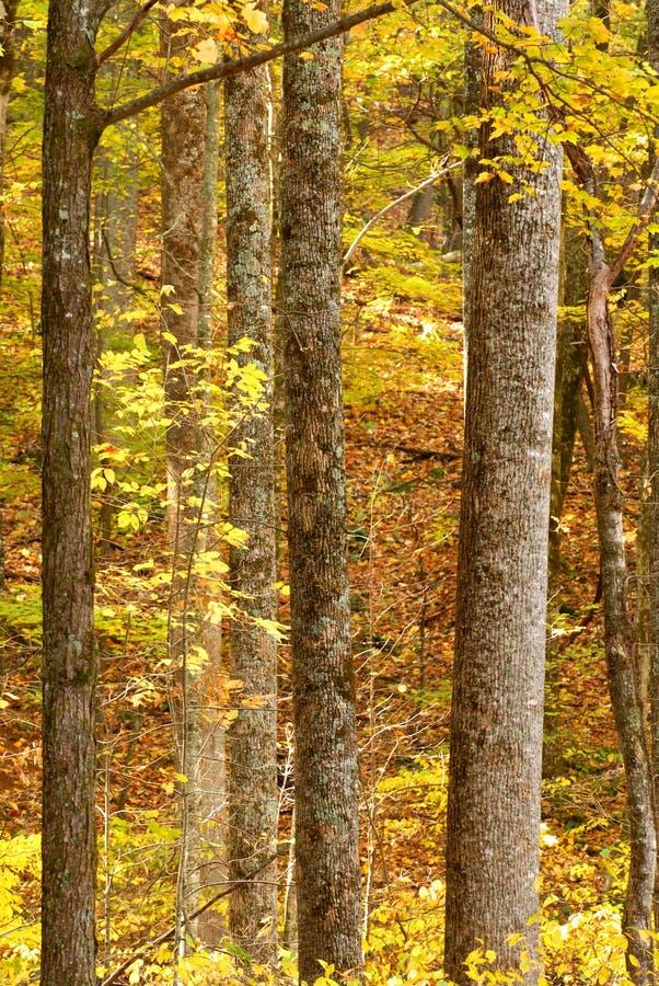 Bäume, die ihre Farbe in einer Herbsteinstellung zeigen stockfoto