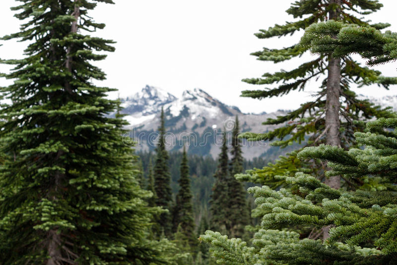 Bäume, die Kaskaden-Gebirgszug in Washington gestalten lizenzfreie stockfotografie