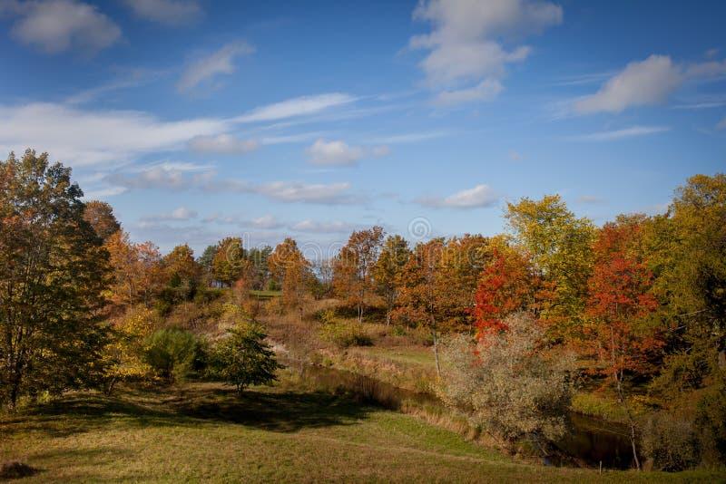 Bäume, die noch mit etwas goldenen Farben grün bleiben stockfotografie