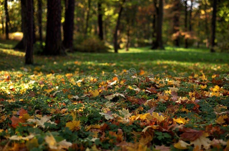 Bäume, die noch mit etwas goldenen Farben grün bleiben lizenzfreies stockfoto