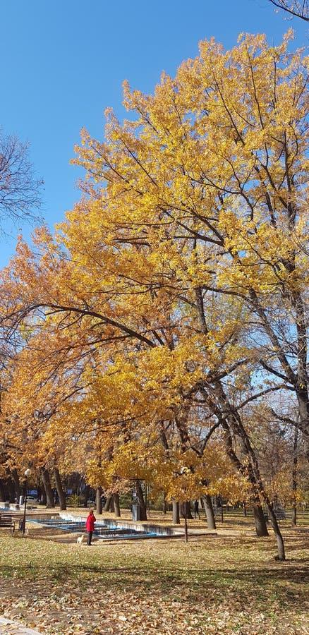 Bäume, die noch mit etwas goldenen Farben grün bleiben Herbstliche Bäume und Blätter in den Sonnenstrahlen stockbilder
