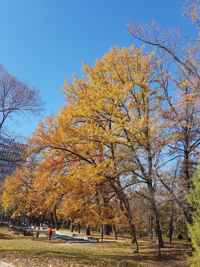 Bäume, die noch mit etwas goldenen Farben grün bleiben Herbstliche Bäume und Blätter in den Sonnenstrahlen lizenzfreies stockbild