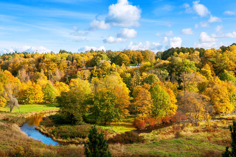Bäume, die noch mit etwas goldenen Farben grün bleiben Toila, Estland, Europa stockbilder