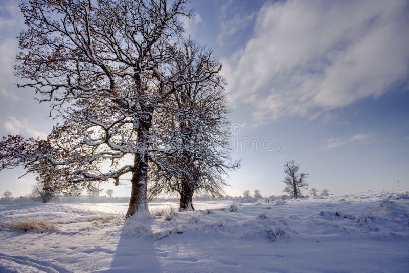 Bäume, die Schatten auf Schnee bilden lizenzfreie stockfotos