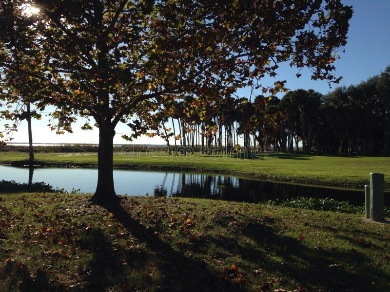 Bäume, die See übersehen lizenzfreie stockfotos