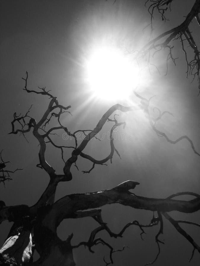 Bäume, die unter dem Sun sich treffen stockbilder