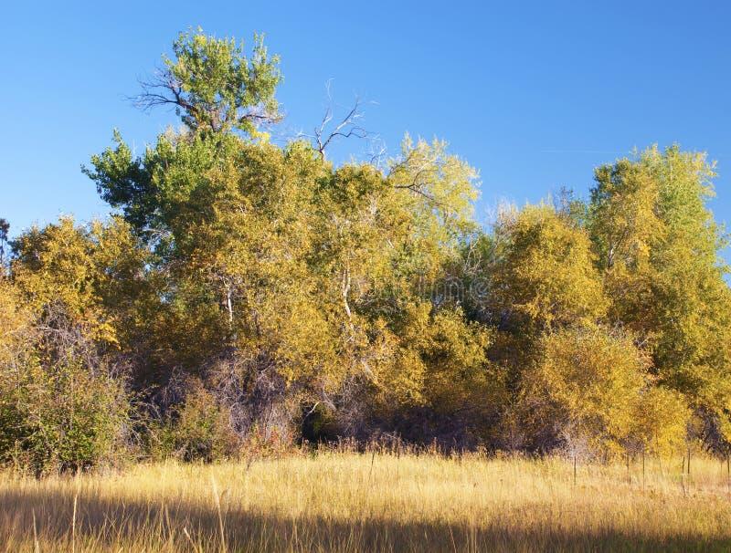 Bäume drehend gelb im Herbst lizenzfreies stockbild