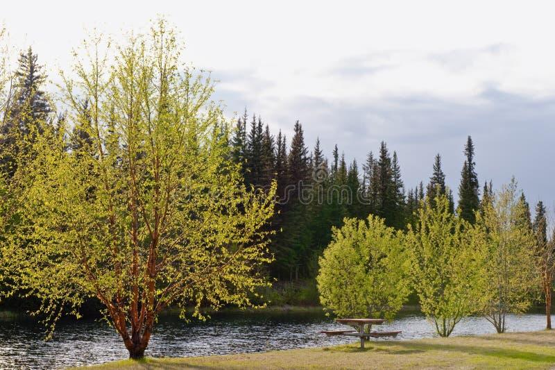Bäume durch Flussquerneigung im Frühjahr stockfoto