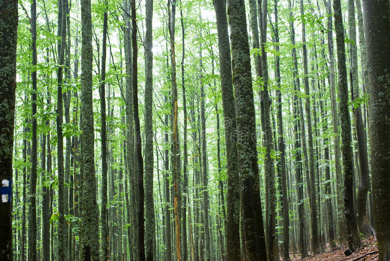 Bäume in einem Wald stockfotos