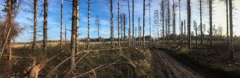 Bäume in einem Wald beschädigt während eines Windsturms lizenzfreie stockfotografie