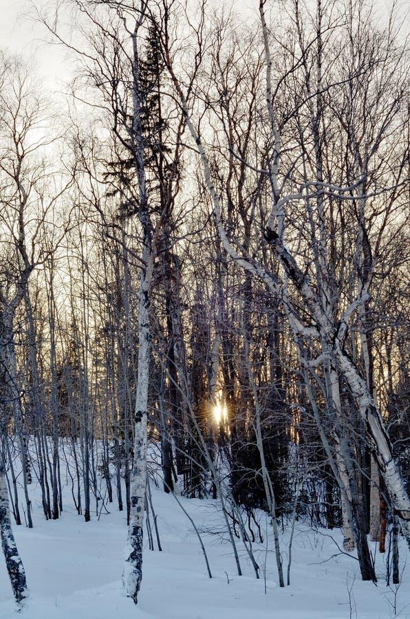 Bäume in einer Stadt parken auf Wintersonnenuntergang stockfotografie