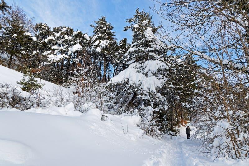 Bäume in einer Winterlandschaft auf der Hochebene von Vercors stockbild