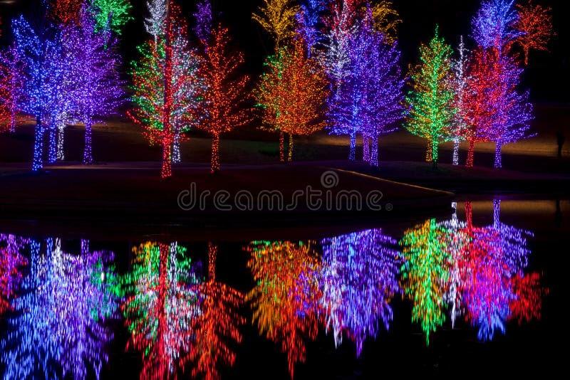 Bäume eingewickelt in LED-Lichtern für Weihnachten lizenzfreies stockbild