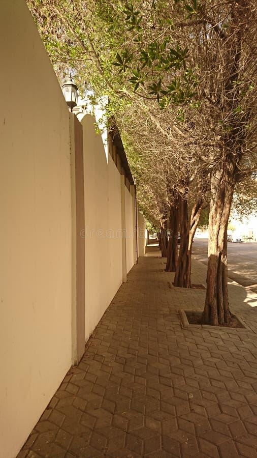 Bäume entlang dem Fußweg lizenzfreie stockbilder