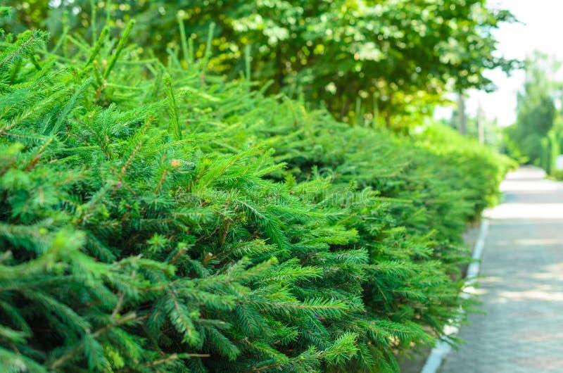 Bäume entlang der schattigen Gasse im Sommerpark lizenzfreies stockbild