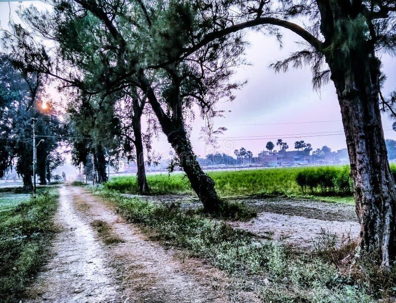 Bäume entlang Seite mit einem Staubweg in ländlichem Indien lizenzfreies stockbild