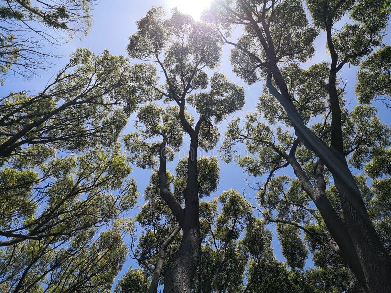 Bäume erreicht oben einen Tiefstand stockbilder