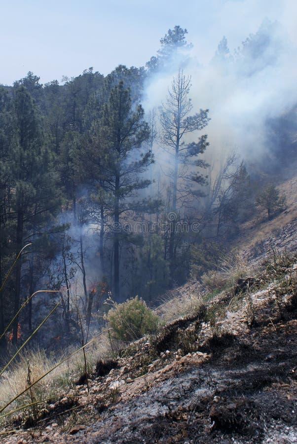 Bäume in Flammen lizenzfreie stockfotos